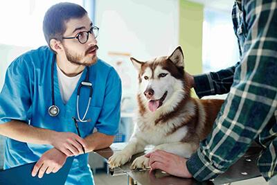 Tiermedizin studieren